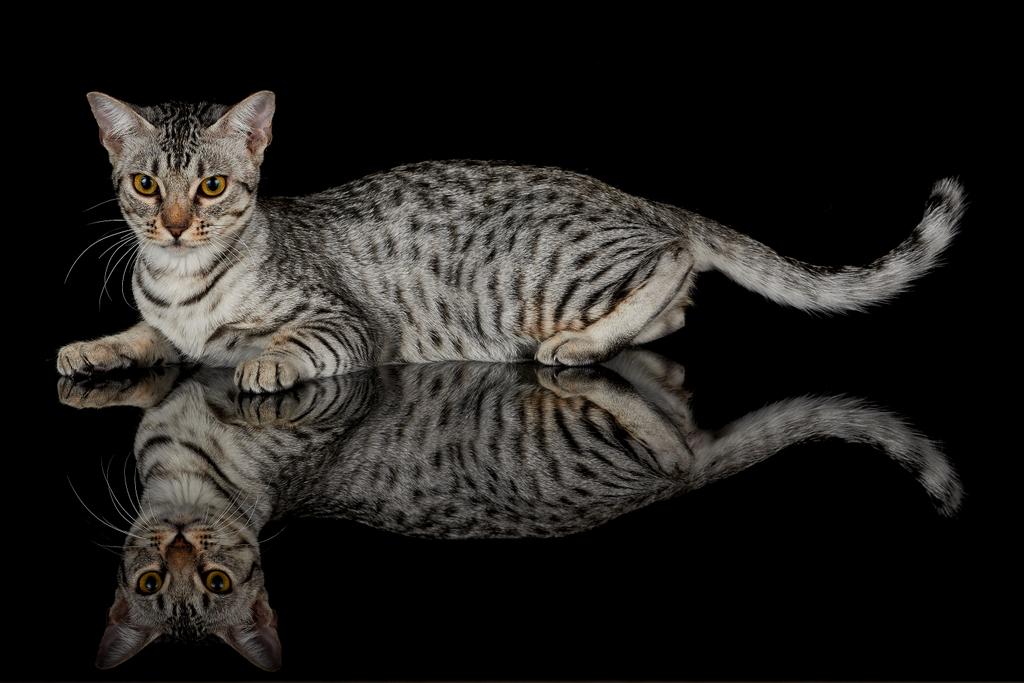 katzen suchen ein zuhause duisburg